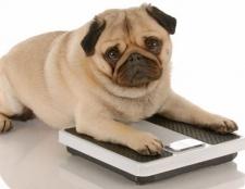 [Infografik] ist mein fettleibig Haustier?